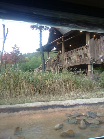 house-giraffe