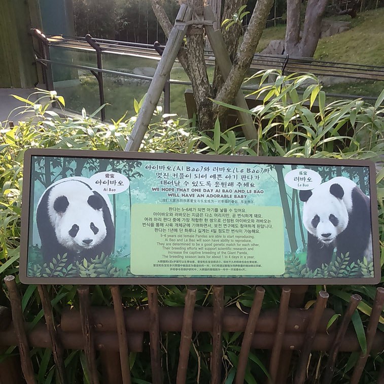 pandaeverland