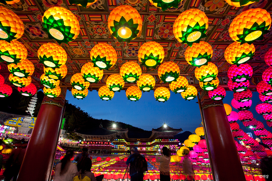Enjoy 5 Best Spring Festivals in Korea